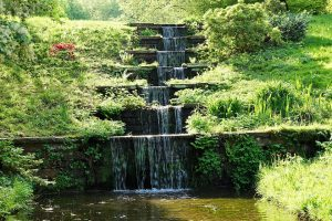 ornamental grass used as a water fall backdrop