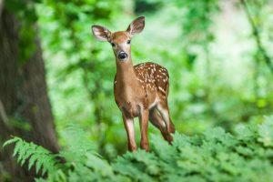 deer in field of green